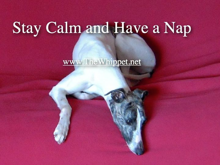 Stay calm and have a nap
