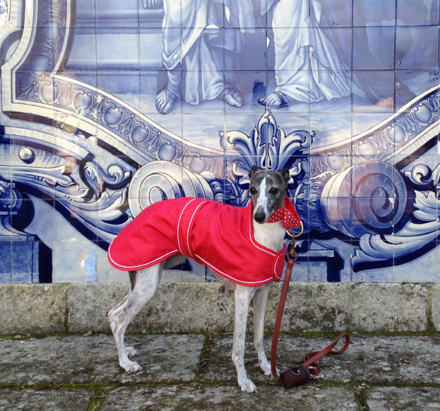 Find the Perfect Whippet Coats for Winter