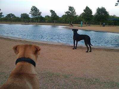 Chile looks on as Pepper poses as a Whippet.
