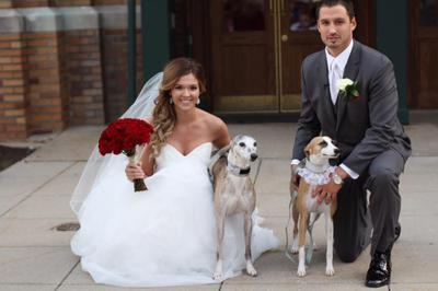 Wedding Whippets!