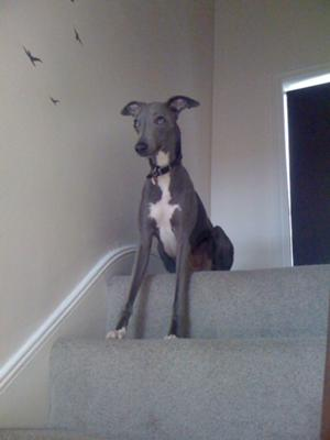 Ferris on stairs
