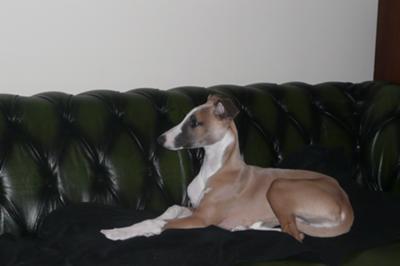 The sofa is mine