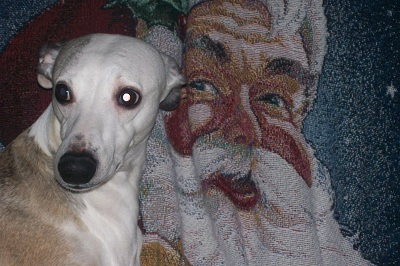 Bandit trying to butter up the Santa Blanket!!