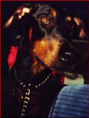 Sagan in 1999