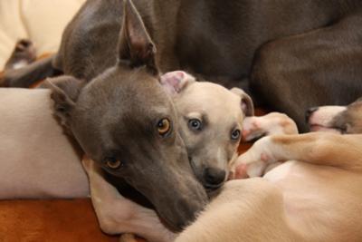 Bailey & Freddie