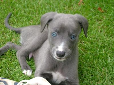 Dogs With Baby Blue Eyes