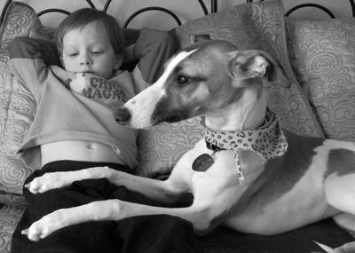 Whippet and child