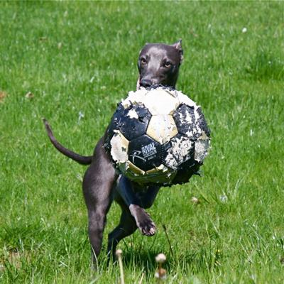 Bailey Soccer Star