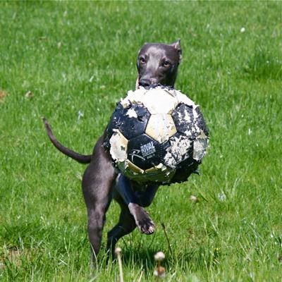 Bailey Soccer Star