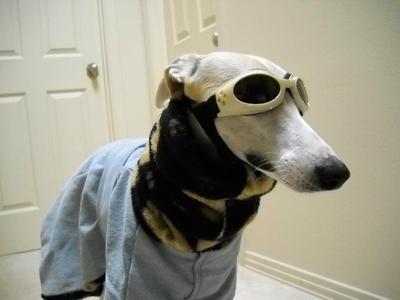 Celebrity Hound