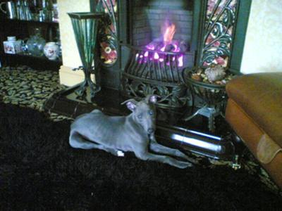 Firedog?