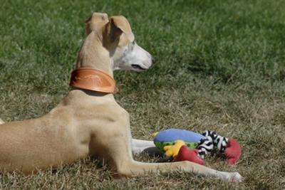 Whats A Dog Collar