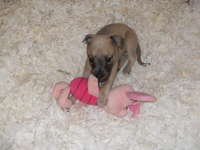 Milly with piglet