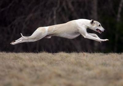 Lana runing