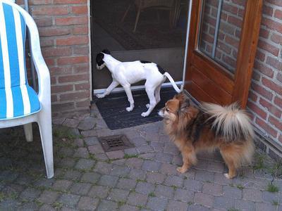 Let me in, weeee/ooo!