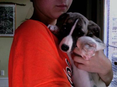 Romeo cuddling