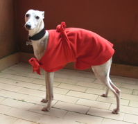 red whippet coat