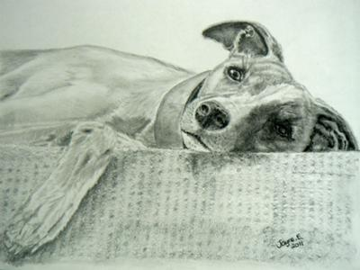 My drawing of Bitzer relaxing on the stairs!