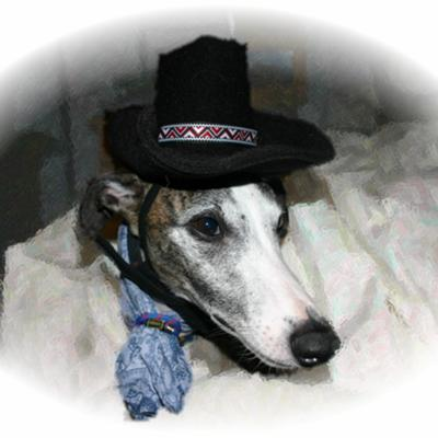 Western Whippet