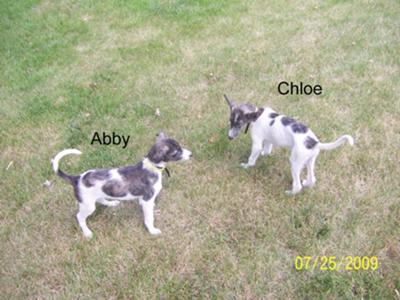 Abby and Cloe