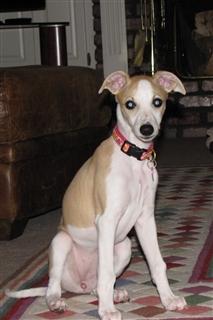 Daisy - 10 Weeks