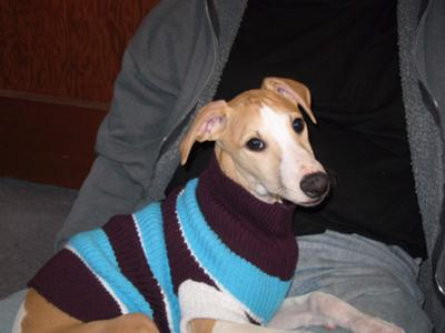 Spanky's first sweater !
