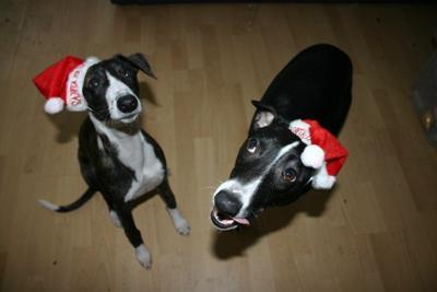 Christmas Woggies