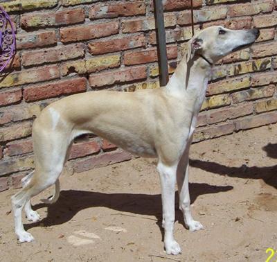 Mooch-E at 8 months.