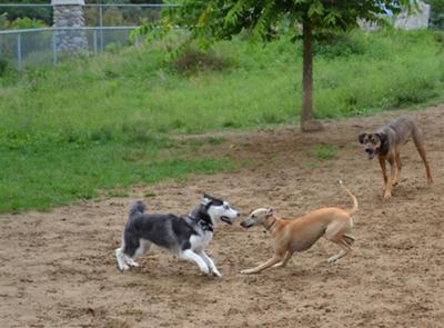 At the dog park!