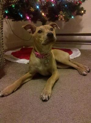 This is Remmy December 11the 2012