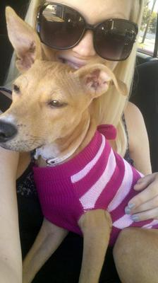 This was the day we found out she had mange :(