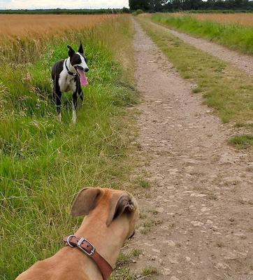 Sniffing around with Magpie and Zip