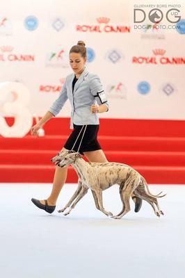 kollaps at world dog show