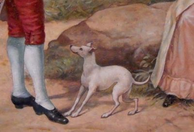 Picture od Italian greyhound or whippe
