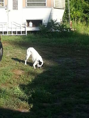 Patches playing outside