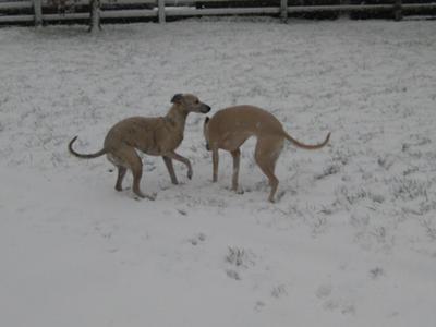 Lulu and Twiglet