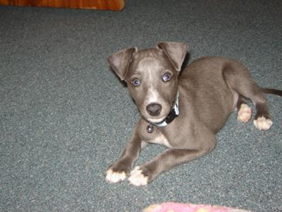 my baby blue eyes