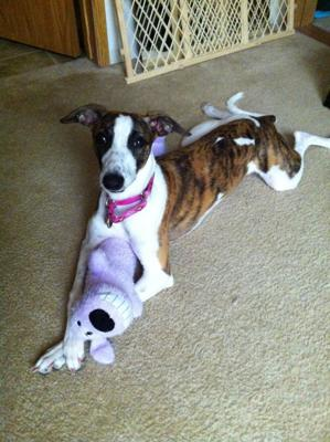 Icee posing with her favorite toy.