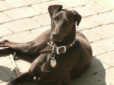 Charlie sunning on the patio